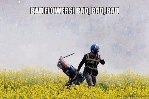 funny-picture-bad-flowers
