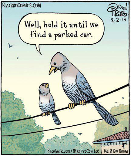 funny-picture-bird-hold-poop-car