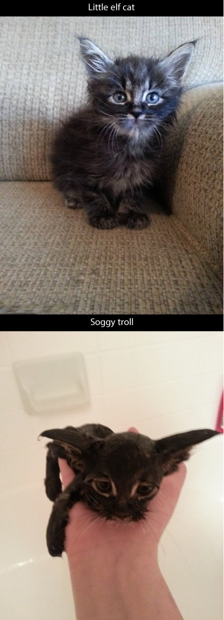 funny-picture-cat-bath-troll