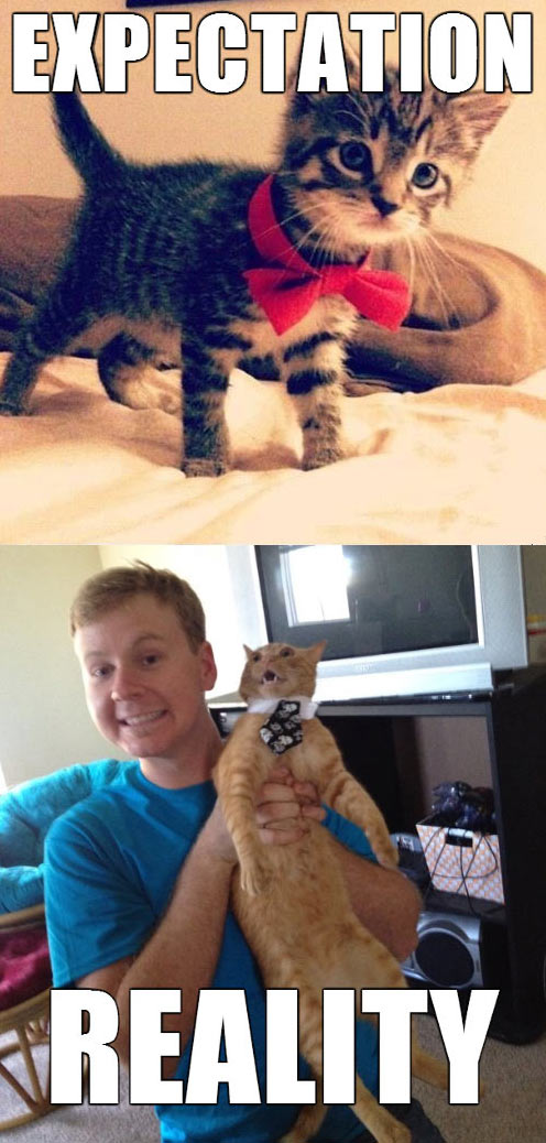 funny-picture-cat-bow-expectation-reality