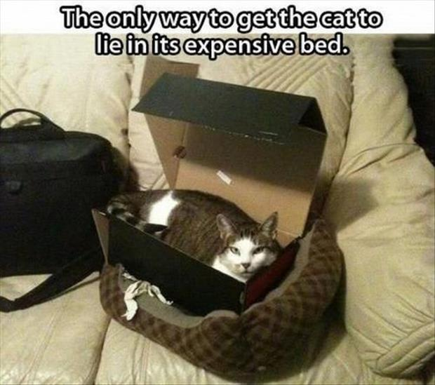 funny-picture-cat-expensive-bed