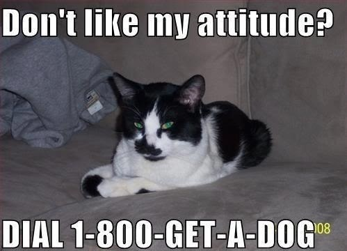 funny-picture-cat-get-a-dog