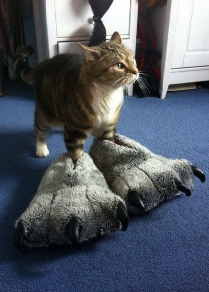 funny-picture-cat-huge-paws