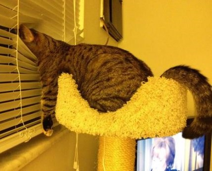 funny-picture-cat-night-watch