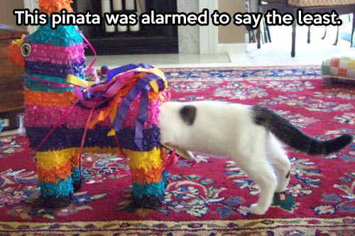 funny-picture-cat-pinata-Mexican