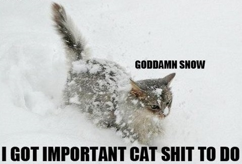 funny-picture-cat-snow-damn