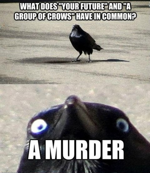 funny-picture-crow-creepy-murder