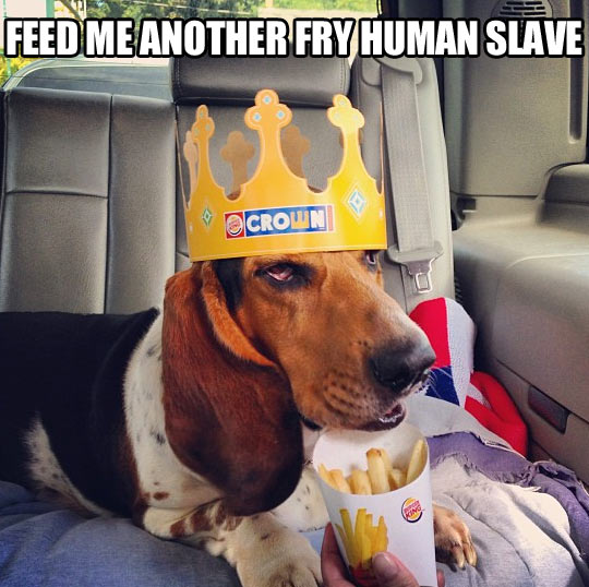 funny-picture-crown-dog-fry-slave-french-fries