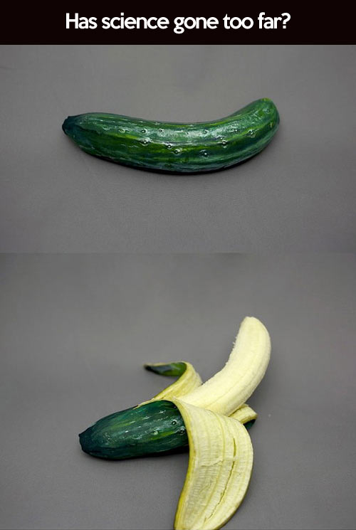 funny-picture-cucumber-banana-science