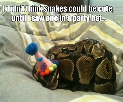 funny-picture-cute-snake-party-hat