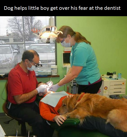 funny-picture-dog-dentist-little-kid
