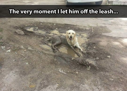 funny-picture-dog-dirty