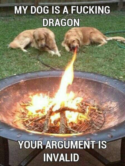 funny-picture-dog-dragon-fire-argument
