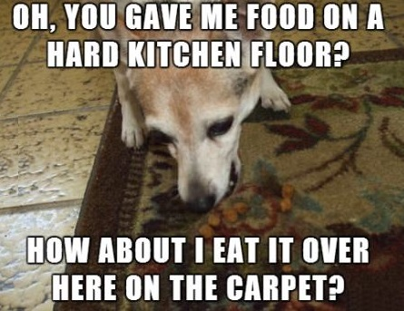 funny-picture-dog-food-carpet
