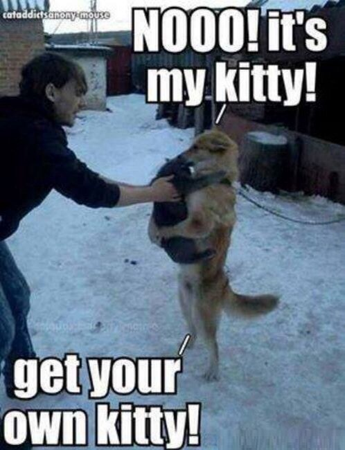 funny-picture-dog-kitty