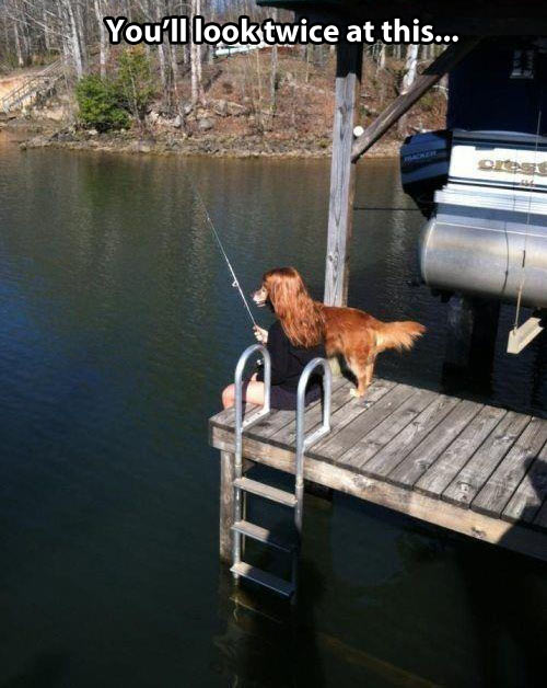 funny-picture-dog-lady-hair-lake