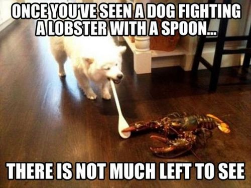 funny-picture-dog-lobster-fight.jpg