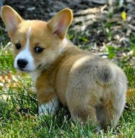 funny-picture-dog-look-at-my-fluffy-butt