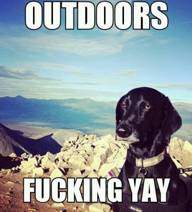 funny-picture-dog-outdoors-yay