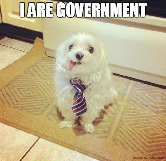 funny-picture-dog-tie-government