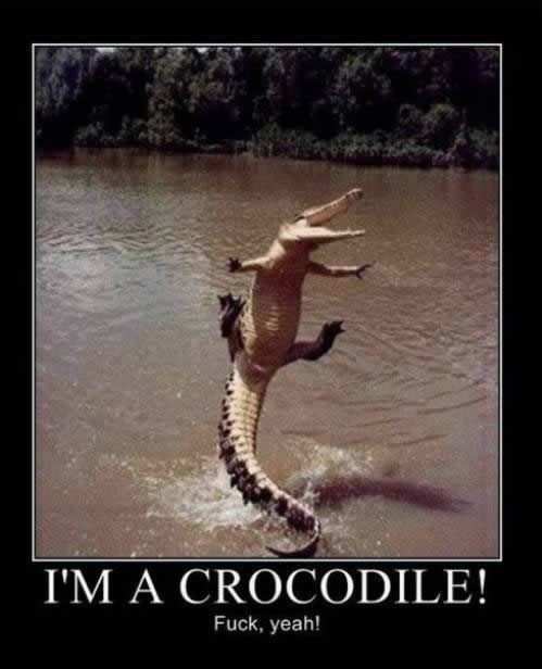 funny-picture-flying-crocodile-fuck-yeah