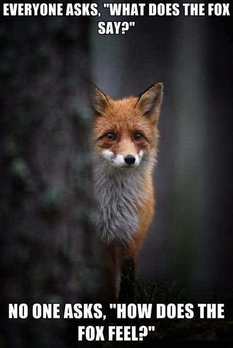 funny-picture-fox-say-feel