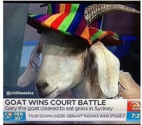 funny-picture-goat-wins-court-battle