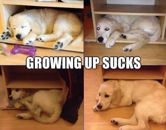 funny-picture-growing-up-sucks