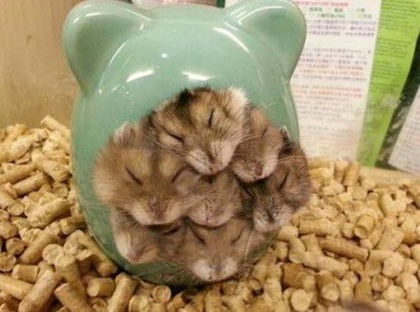 funny-picture-hamsters-all-in-one