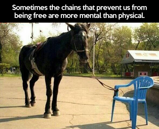 funny-picture-horse-chair-mental-chains-physical