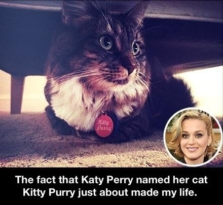 funny-picture-katy-perry-cat-name
