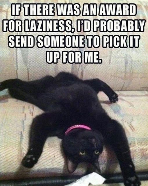 funny-picture-lazy-cat