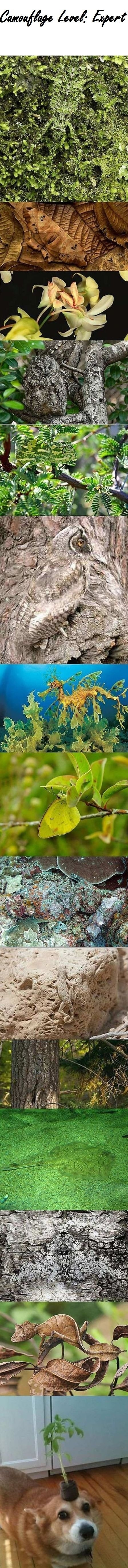 funny-picture-nature-camouflage-animals