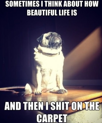funny-picture-pug-life-shit