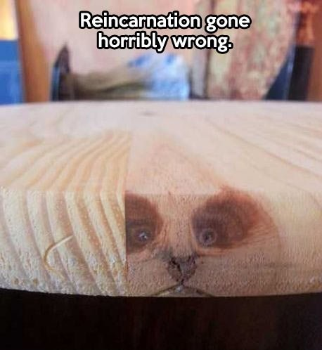 funny-picture-reincarnation-horribly-wrong