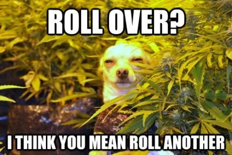 funny-picture-roll-another-high-dog