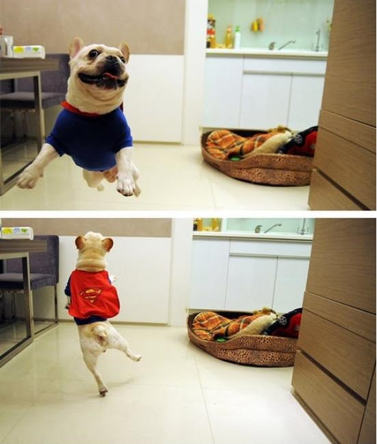funny-picture-super-dog