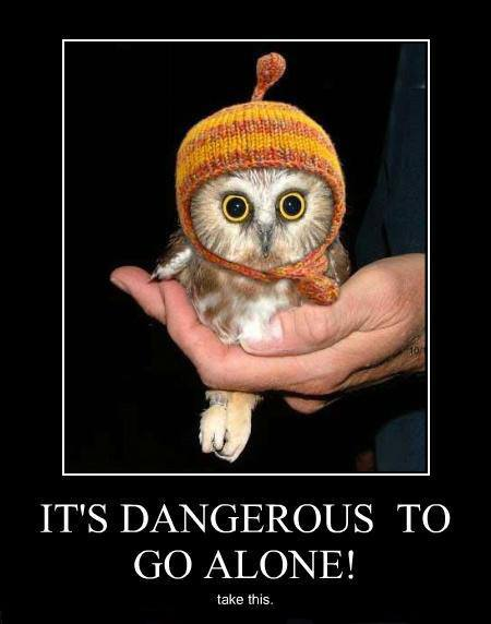 funny-picture-tale-owl