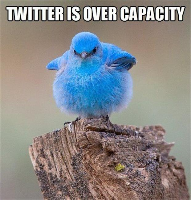 funny-picture-twitter-is-over-capacity