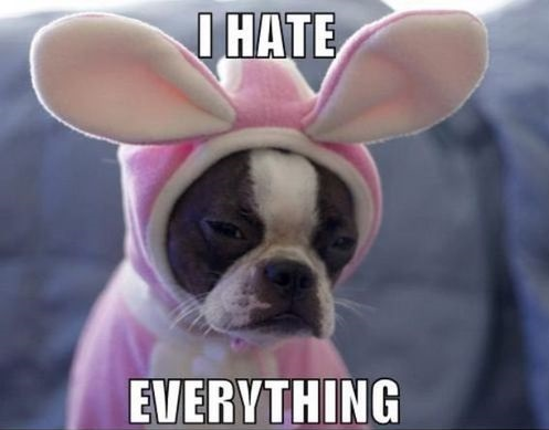 funny-picture0dog-costume-bunny