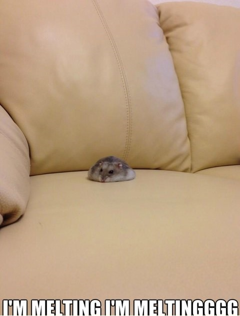 funny-pciture-melting-mouse