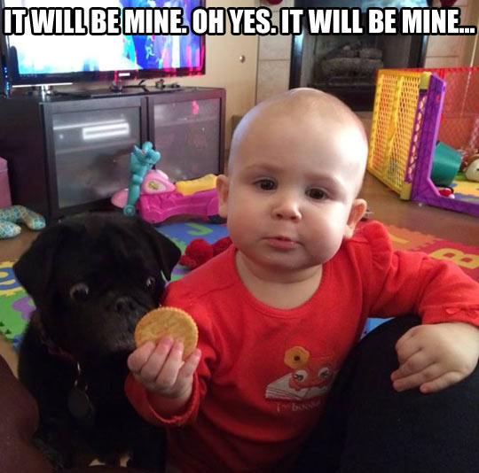 funny-picture-baby-cookie-dog-watching-hungry