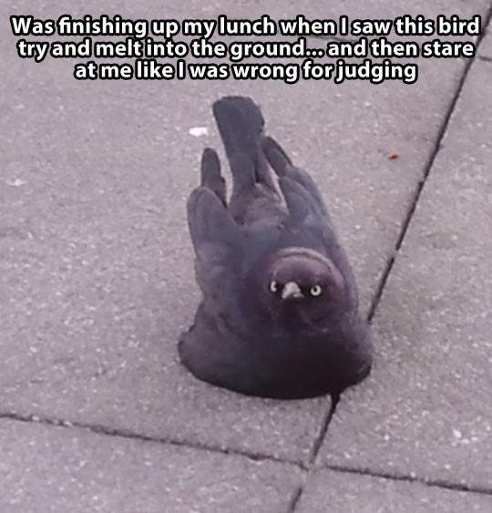 funny-picture-bird-stare-judging