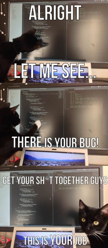 funny-picture-cat-bug-work