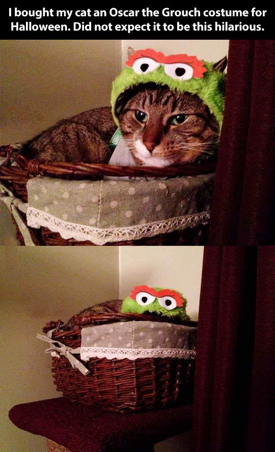 funny-picture-cat-costume-Oscar-Grouch-bed