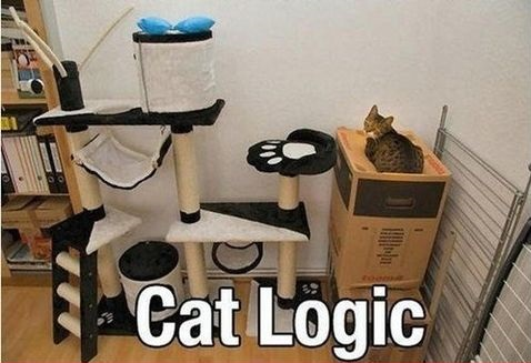 funny-picture-cat-logic-at-its-finest