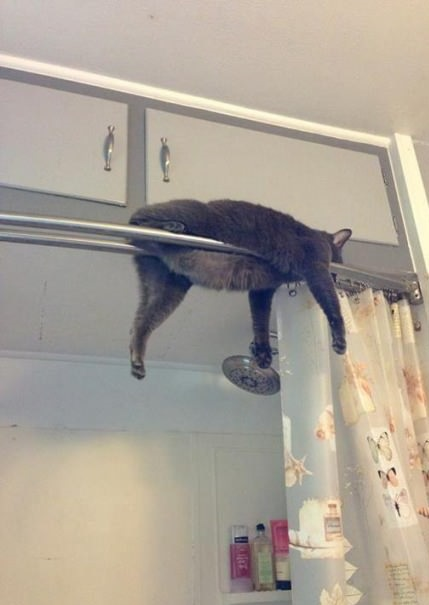 funny-picture-cat-stuck-shower