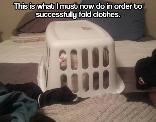 funny-picture-cat-trapped-fold-clothes