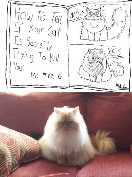 funny-picture-cat-want-to-kill-you