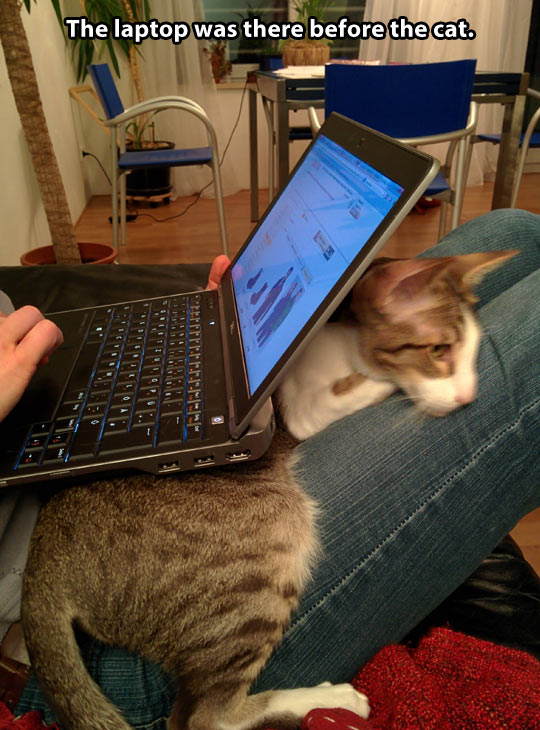 funny-picture-computer-cat-below